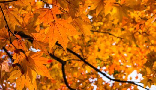 秋のダニ対策の必勝法!喘息やアレルギー症状を引き起こす前にするべき事